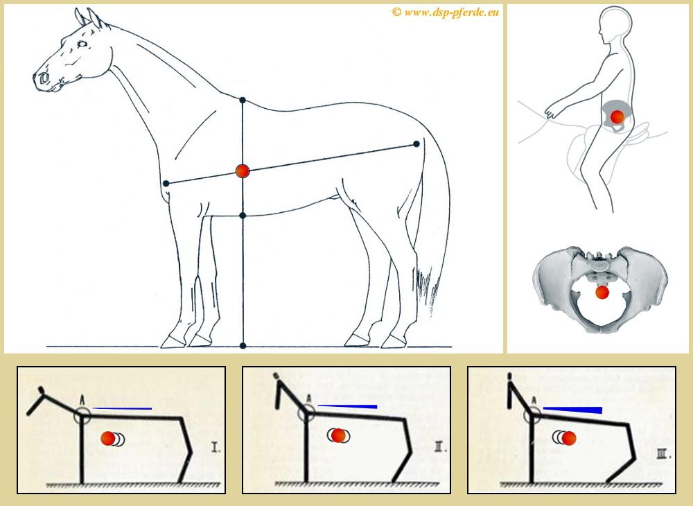 Publikace006: Těžiště jezdce a koně + shromažďování